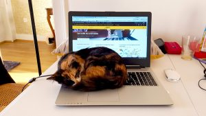 Mon chat couché sur mon clavier alors que je travaille sur ce site.