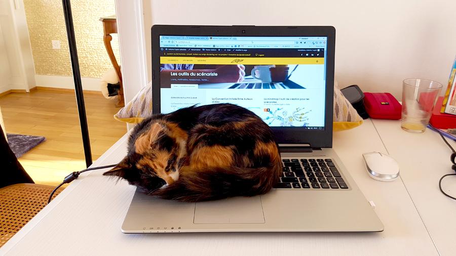 Tu botteras le cul aux chats pour écrire !