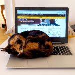 Le chat empêche d'écrire
